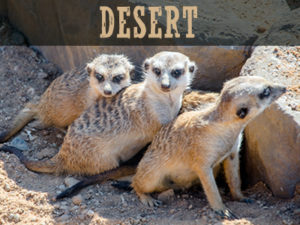 DesertAnimals.Net