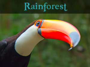RainforestAnimals.Net