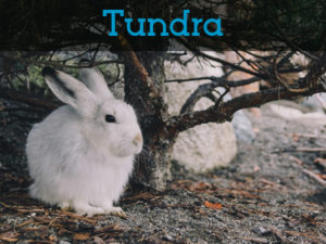 TundraAnimals.Net